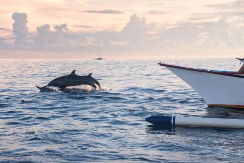 dolphin tour 02
